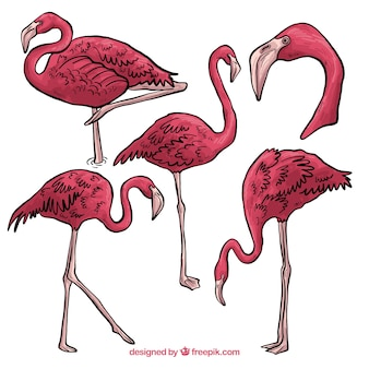 Set van roze flamingo's met verschillende houdingen