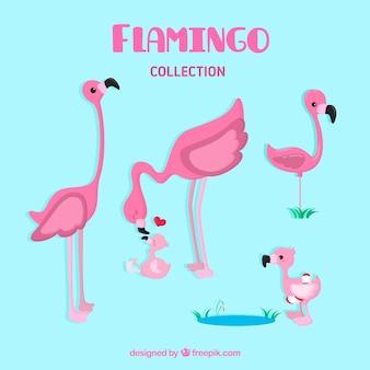 Set van roze flamingo's met verschillende poses
