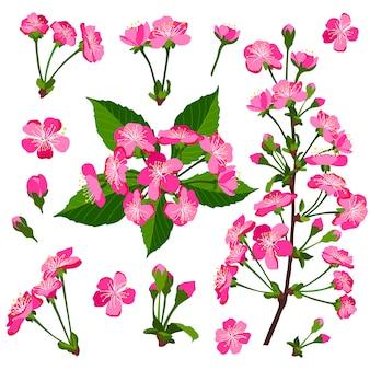 Set van roze kersenboom bloemen