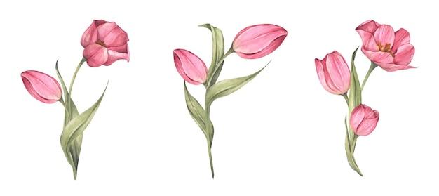 Set van roze tulpen. aquarel bloemen botanische illustratie.