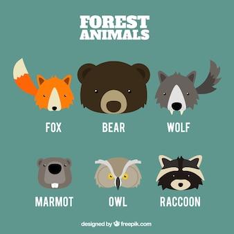 Set van schattige dieren gezichten