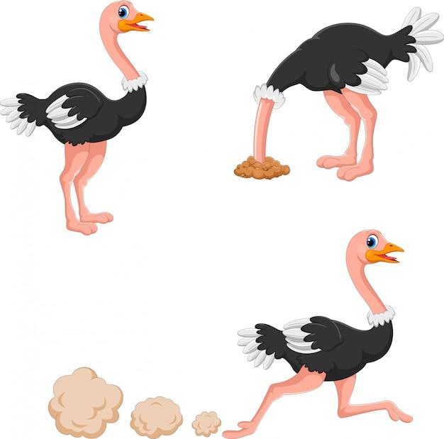 Set van schattige struisvogel cartoon