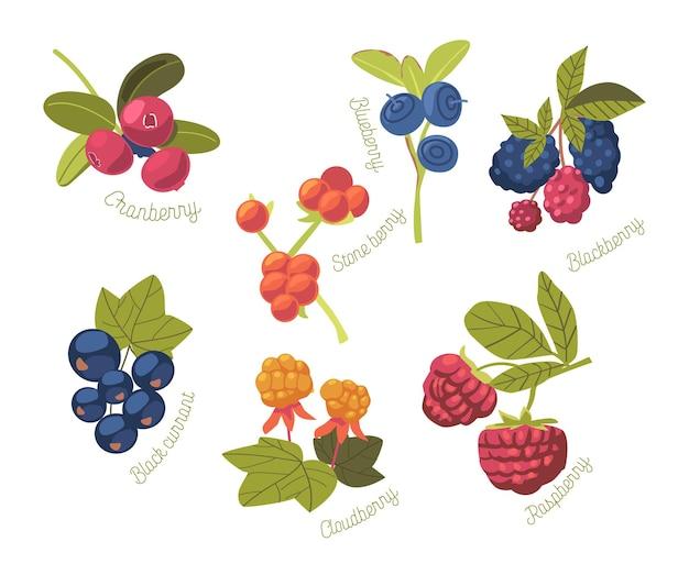 Set van seizoensgebonden zomertuin en wilde bessen cranberry, stone berry, blueberry en blackberry, raspberry of cloudberry