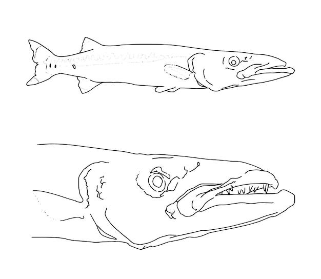 Set van snoek vissen in volle groei hoofd lineaire schets doodle