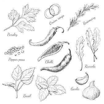 Set van specerijen in schets stijl
