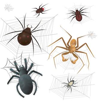 Set van spinnenweb met spinnen