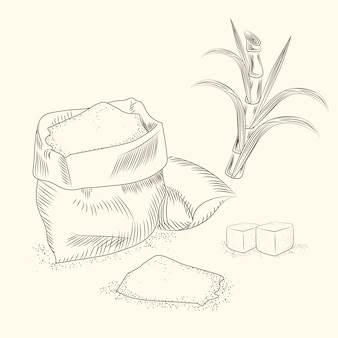 Set van suikerriet. hand tekenen suikerriet bladeren.