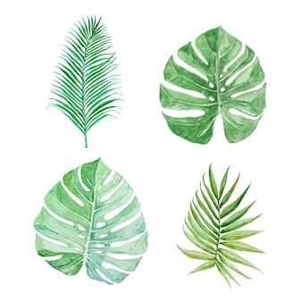 Set van tropisch groen. . palm's en monstera's bladeren.