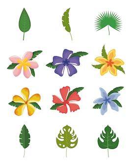Set van tropische bladeren en bloemen