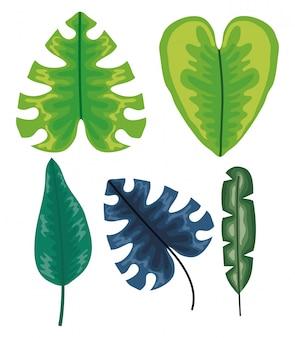 Set van tropische bladeren planten