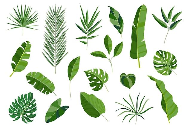 Set van tropische bladeren. verschillende groene bladcollectie. kleurrijke vectorillustratie op witte achtergrond in cartoon stijl.