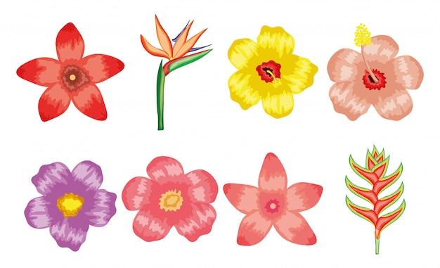 Set van tropische bloemen planten