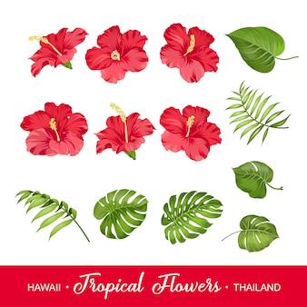Set van tropische bloemen