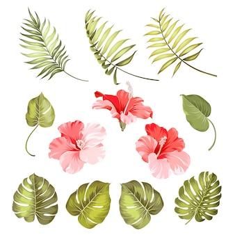 Set van tropische elementen hibiscus bloem.
