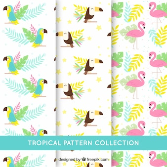 Set van tropische patronen met verschillende vogels in vlakke stijl