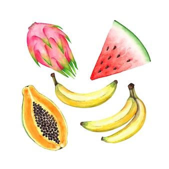 Set van tropische vruchten die vector aquarel tekenen
