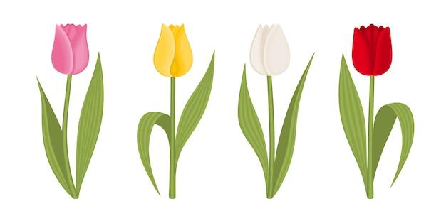 Set van tulpen