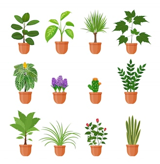 Set van twaalf kamerplant met bloemen in een pot in vlakke stijl. binnen gerb op geïsoleerde plank.