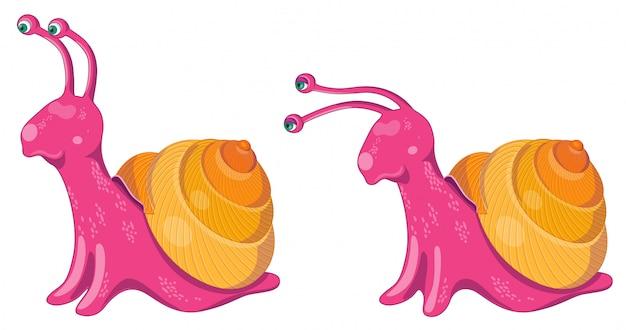 Set van twee slakken