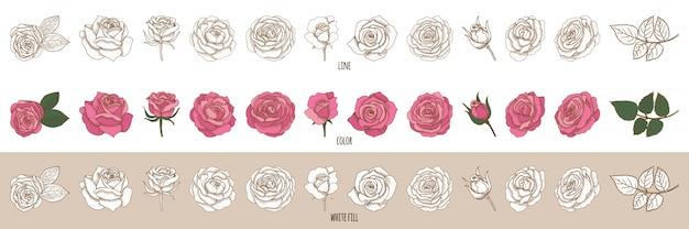 Set van vector vintage hand getrokken rozen.