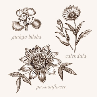 Set van vectorafbeeldingen van geneeskrachtige planten. schoonheid en gezondheid. bio-additieven. ginkgo biloba, passiebloem, colendula.