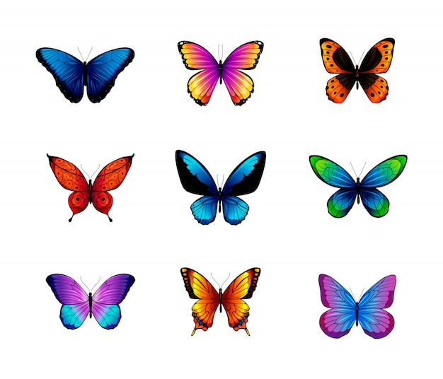 Set van verschillende gekleurde vlinders.