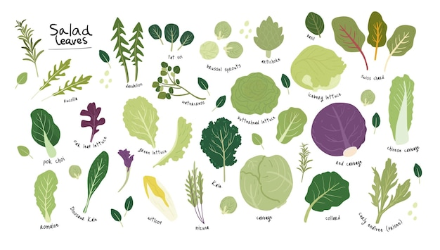 Set van verschillende groene salade laat plantaardige handgetekende illustratie
