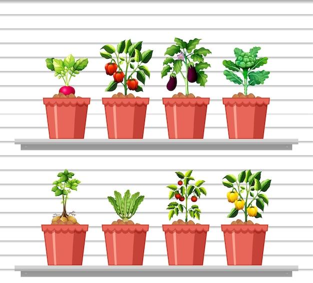 Set van verschillende groenten in verschillende pot op witte wandplank