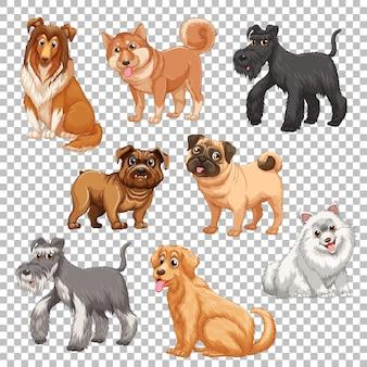 Set van verschillende honden geïsoleerd