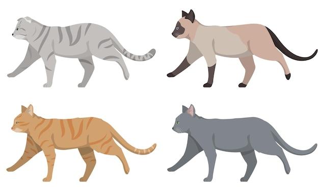 Set van verschillende katten zijaanzicht. siamese, met hangende oren, roodharige en russische blauwe kat.
