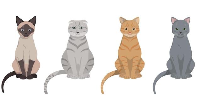 Set van verschillende katten zitten. siamese, met hangende oren, roodharige en russische blauwe kat.