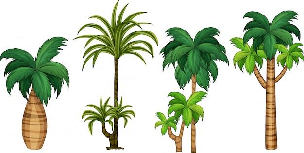Set van verschillende palmboom