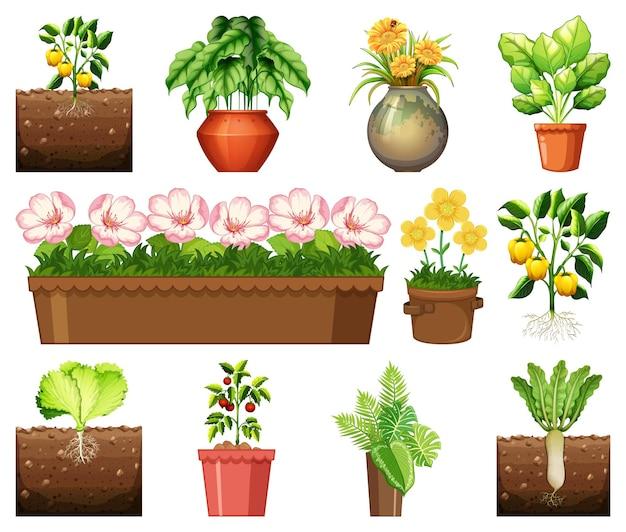 Set van verschillende planten in potten geïsoleerd op een witte achtergrond