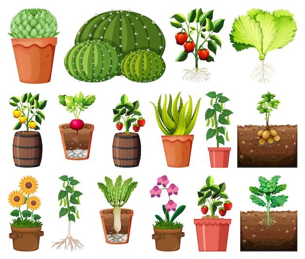 Set van verschillende planten in potten op wit wordt geïsoleerd