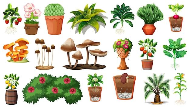 Set van verschillende planten in potten op wit wordt geïsoleerd Gratis Vector