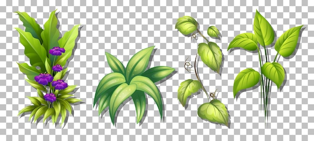 Set van verschillende planten op transparante achtergrond