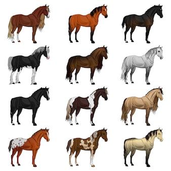 Set van verschillende rassen van paarden