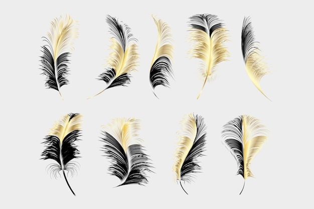 Set van verschillende vallende pluizige dik veren op een witte achtergrond.