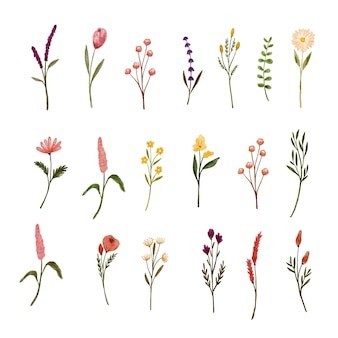 Set van verschillende wilde bloemen aquarel tekenen