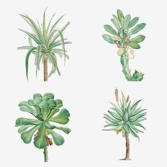 Set van vetplanten en cactussen