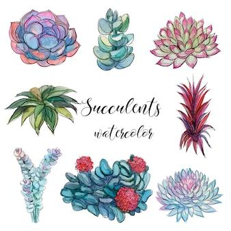 Set van vetplanten. waterverf. graphics.