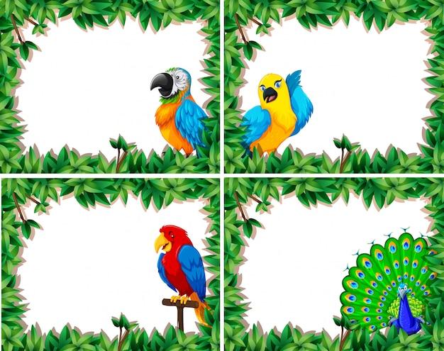 Set van vogel frame