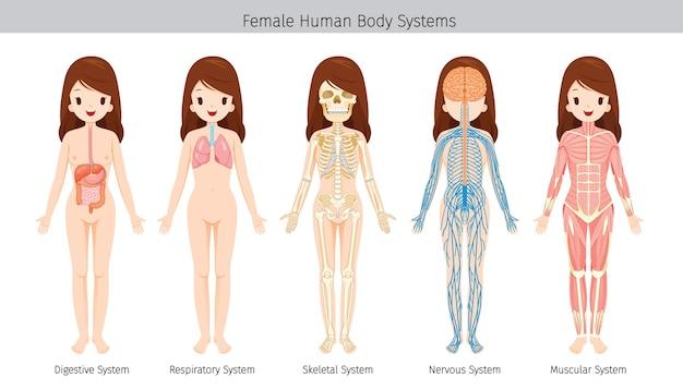 Set van vrouwelijke menselijke anatomie, lichaamssystemen