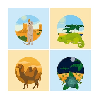 Set van woestijndieren