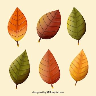 Set van zes herfst droge bladeren