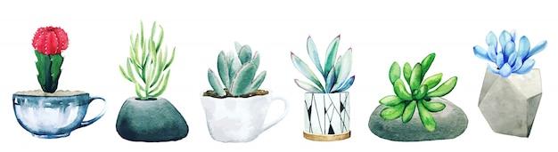 Set van zes ingegoten cactusplanten en vetplanten, hand getrokken