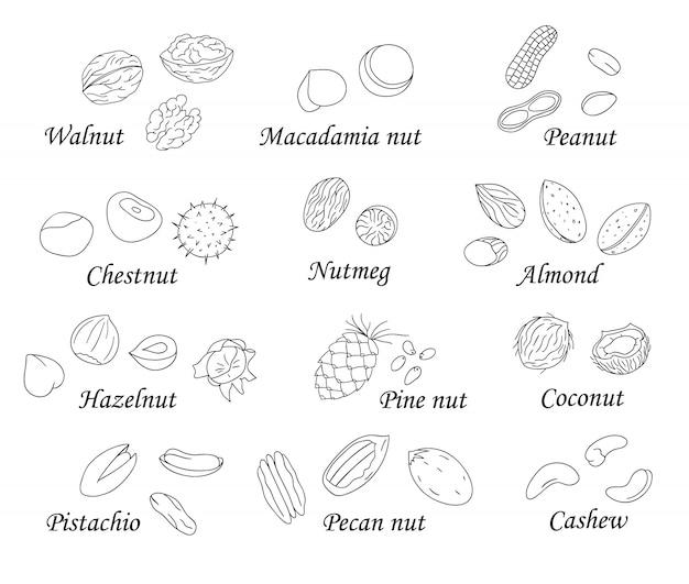 Set van zwarte en witte noten. verzameling van geïsoleerde monochrome hazelnoot, walnoot, pistache, amandel, kokosnoot. voedselillustratie in beeldverhaal of krabbelstijl op wit wordt geïsoleerd dat.