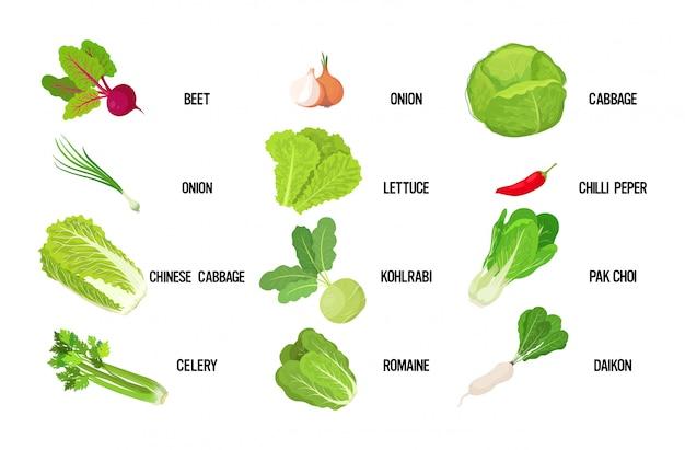 Set verse groene salade laat smakelijke vegetarische gezonde voeding concept horizontaal