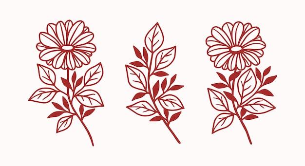 Set vintage botanische gerberabloem en bladelement voor vrouwelijk schoonheidslogo en merk