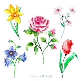 Set vintage plantkunde bloemen